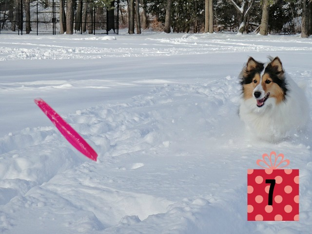 Top 7 Gifts for Dogs