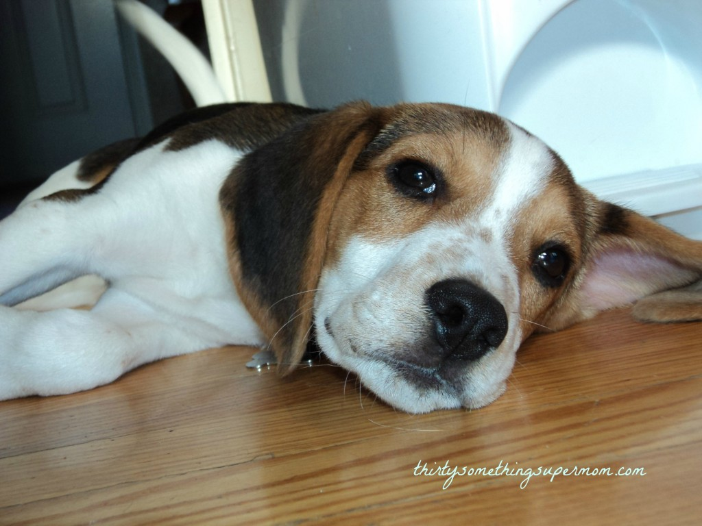 Is Year Round Heartworm Prevention A Scam
