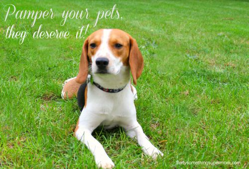 Pamper Your Pets, They Deserve It