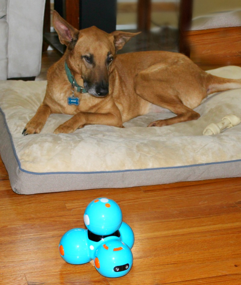 Dash robot with Pet