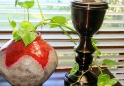 7 Tips for Preparing Plants for Cold Weather