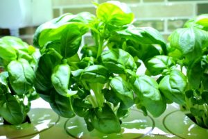 Grow Anything Indoors All Year Long