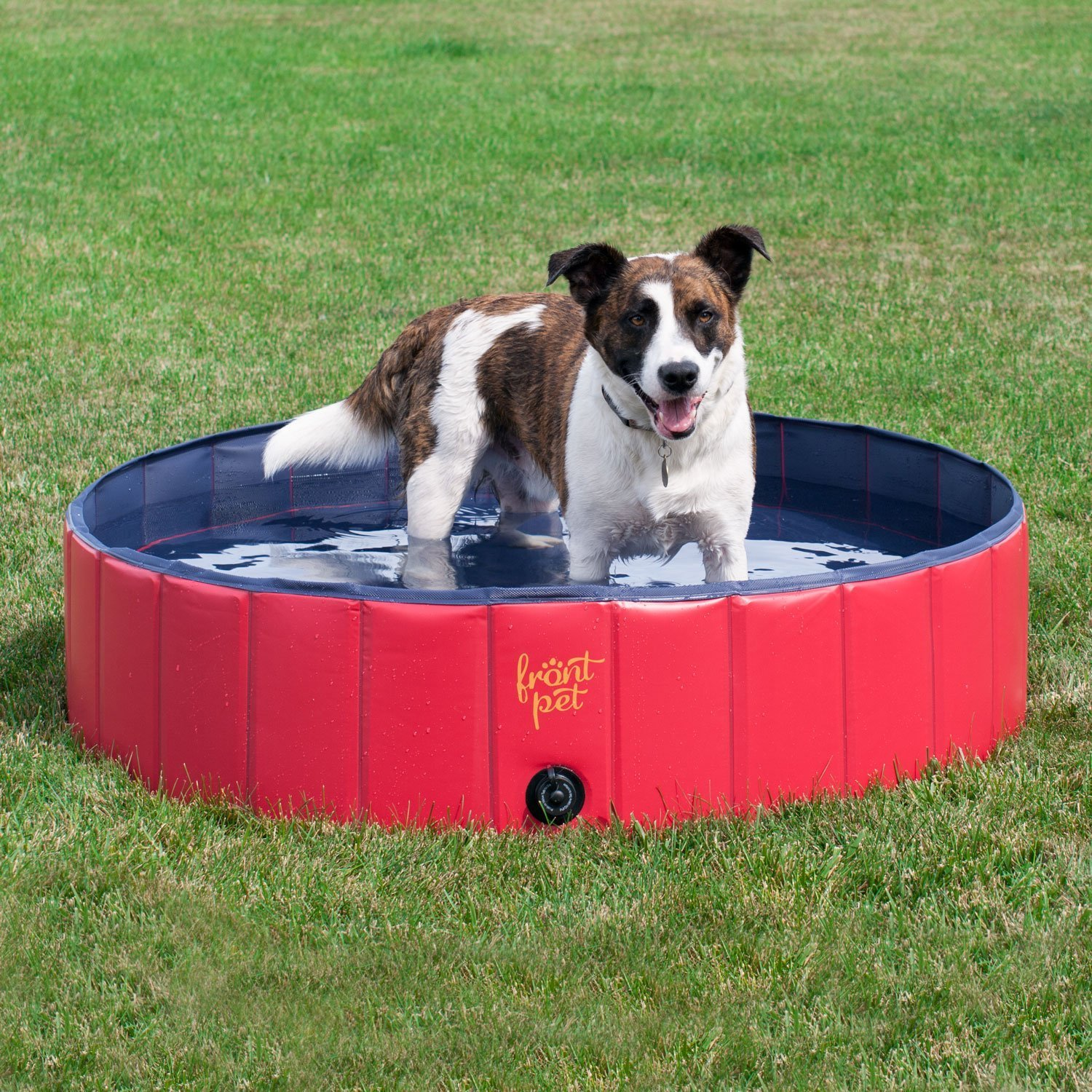 Best Outdoor Toys For Dogs Outdoor Designs
